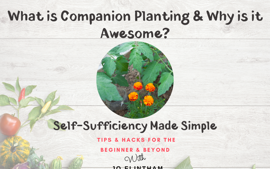 Episode #11 What is Companion Planting & Why Is It Awesome?
